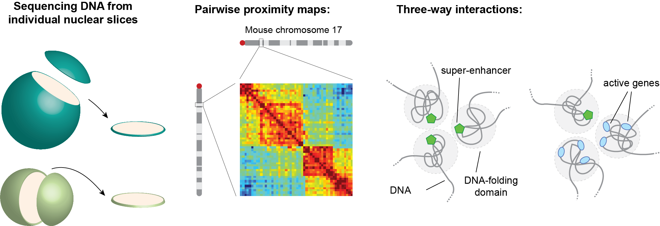 Overview of genome architecture mapping